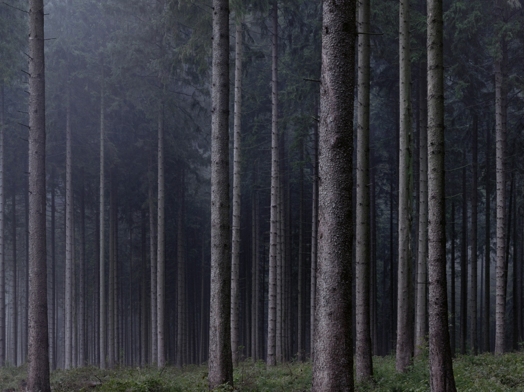 The German Forest and the photography of Michael Lange